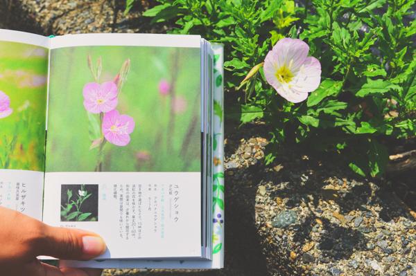 """野の花を探す散歩""""草の辞典"""""""